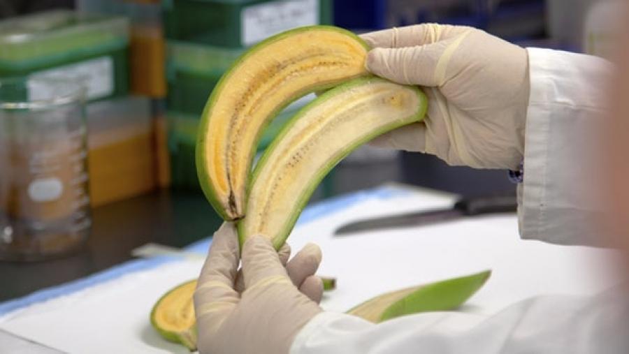 Αυτή η μπανάνα μπορεί να σας σώσει τη ζωή!
