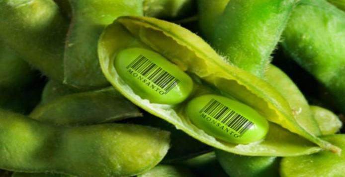 Αυτά είναι τα δώδεκα επιβλαβή προϊόντα της Monsanto