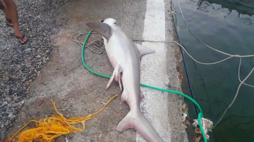 Χανιά: Πήγε να δει τι είχε ψαρέψει και αντίκρισε… καρχαρία!