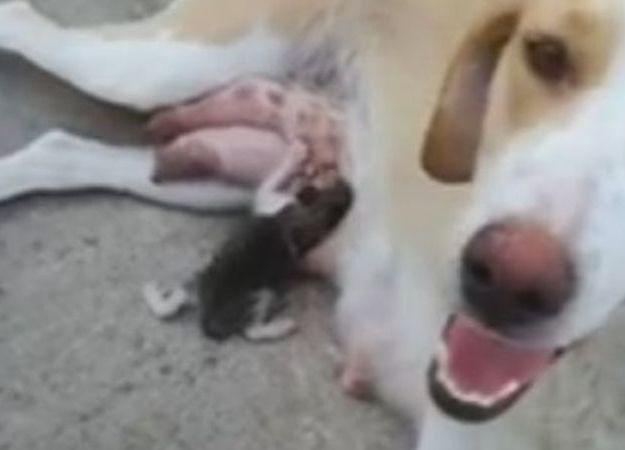 Βίντεο από Λαμία: Σκυλίτσα θηλάζει γατάκι που πέταξαν στα σκουπίδια