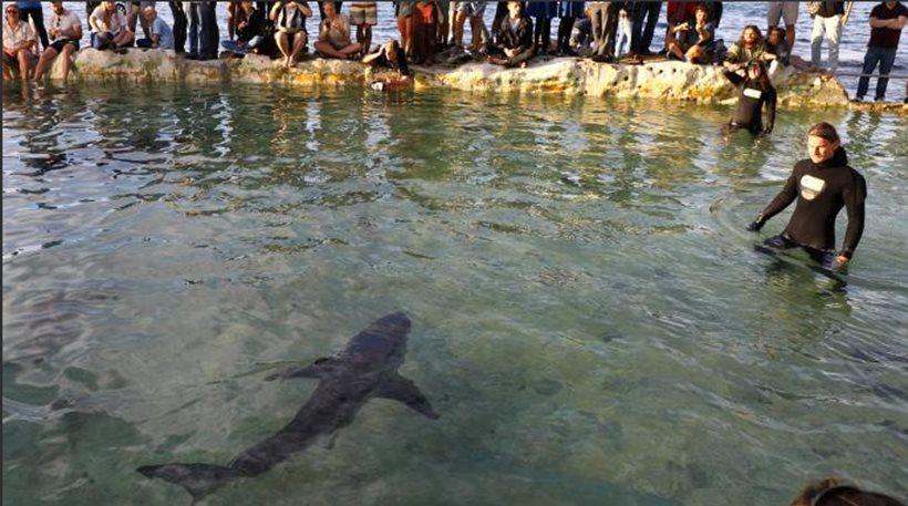 Απίστευτο βίντεο: Λαβωμένος καρχαρίας βγήκε στην παραλία για… βοήθεια και κολυμπούσε με ανθρώπους