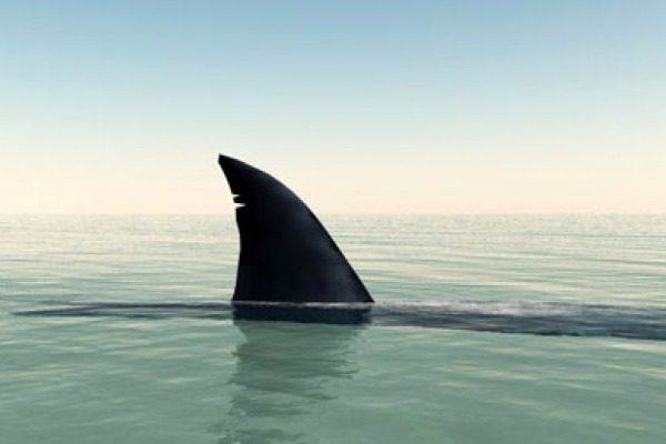 Καρχαρίας που φτάνει τα 4 μέτρα ψαρεύτηκε στην Αιτωλοακαρνανία