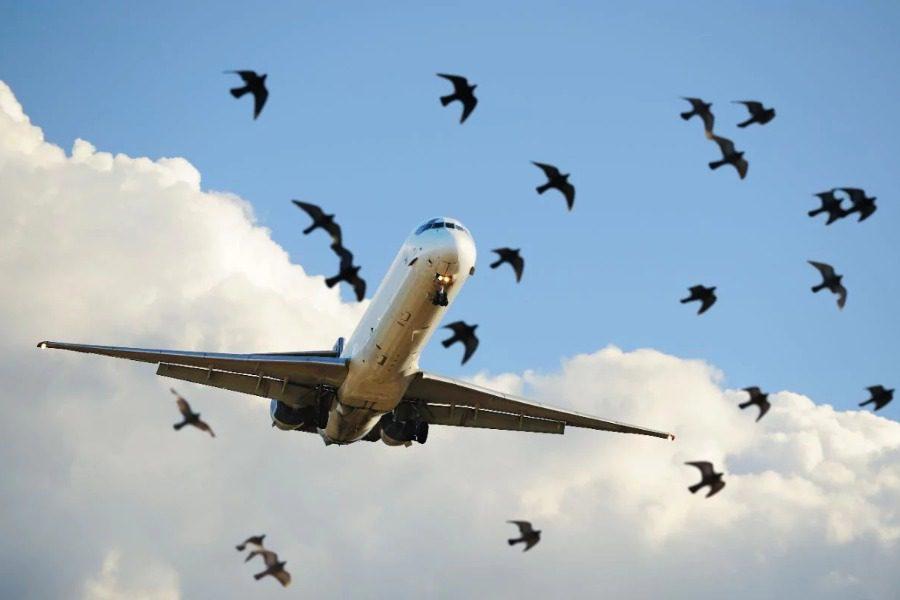 Τι συμβαίνει όταν μπαίνουν πουλιά στον κινητήρα του αεροπλάνου