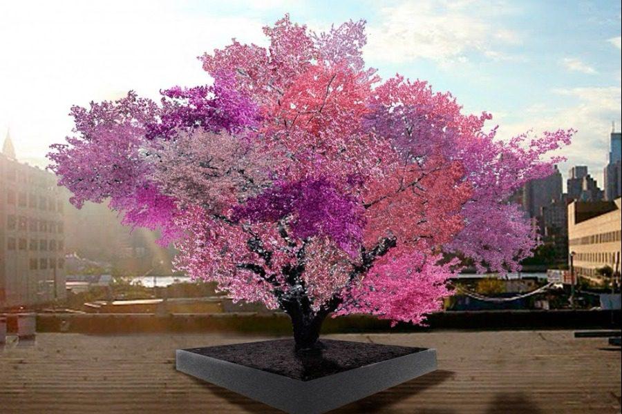 Το δέντρο‑Φρανκενστάιν που παράγει 40 διαφορετικούς καρπούς