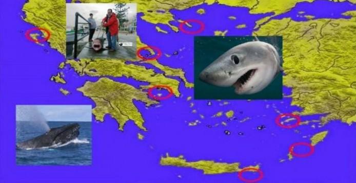 Αυξήθηκε ο αριθμός των Μεγάλων Λευκών καρχαριών στα Ελληνικά νερά