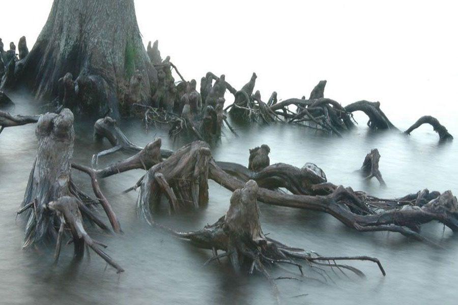 Τα πιο τρομακτικά δέντρα στον κόσμο