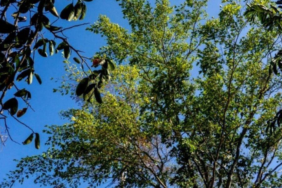 Το «μαγικό δέντρο» που έχει σώσει τον πλανήτη εώς τώρα