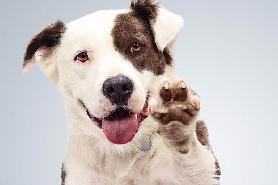 Τι δεν πρέπει να κάνεις μπροστά στο σκύλο σου