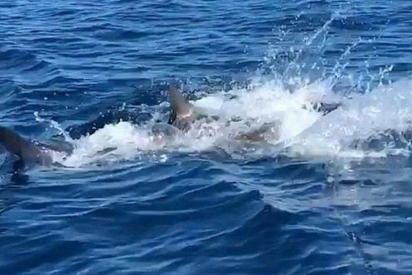 Έπιασαν καρχαρία με το καλάμι αλλά δεν φανταζόντουσαν τι θα ακολουθούσε