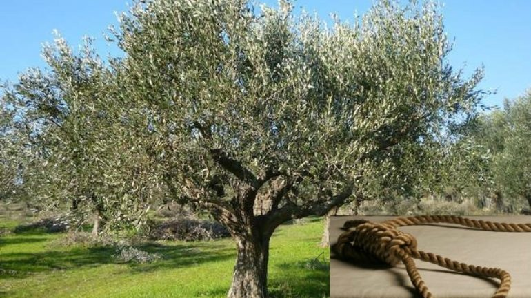 SOS για τις καλλιέργειες από τη θερμή «εισβολή» – Πώς θα προστατεύσουμε τα φυτά μας