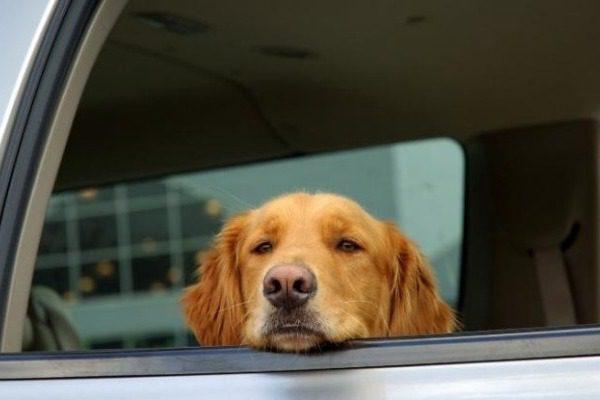 Το επικό σημείωμα ιδιοκτήτη σκύλου που ήταν κλεισμένος μέσα σε αυτοκίνητο