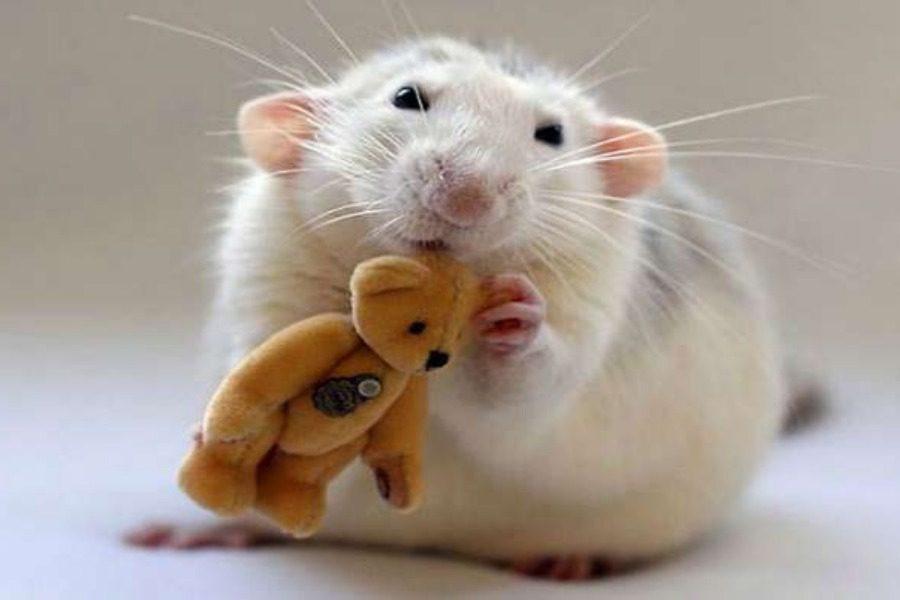 Επιστήμονες μετέτρεψαν αρσενικά ποντίκια σε θηλυκά «παίζοντας» με το DNA τους