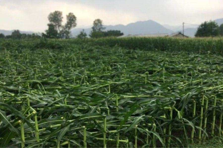 Δείτε: Ανεμοθύελλα και χαλάζι σάρωσαν τις καλλιέργειες στα Τρίκαλα