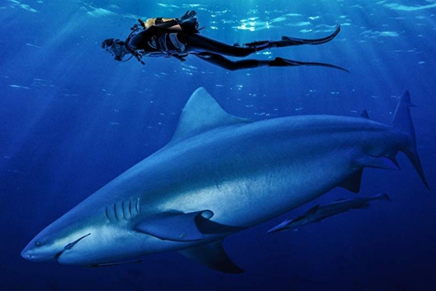 Γιατί τελικά το να χτυπήσεις καρχαρία στη μύτη δεν είναι καλή λύση
