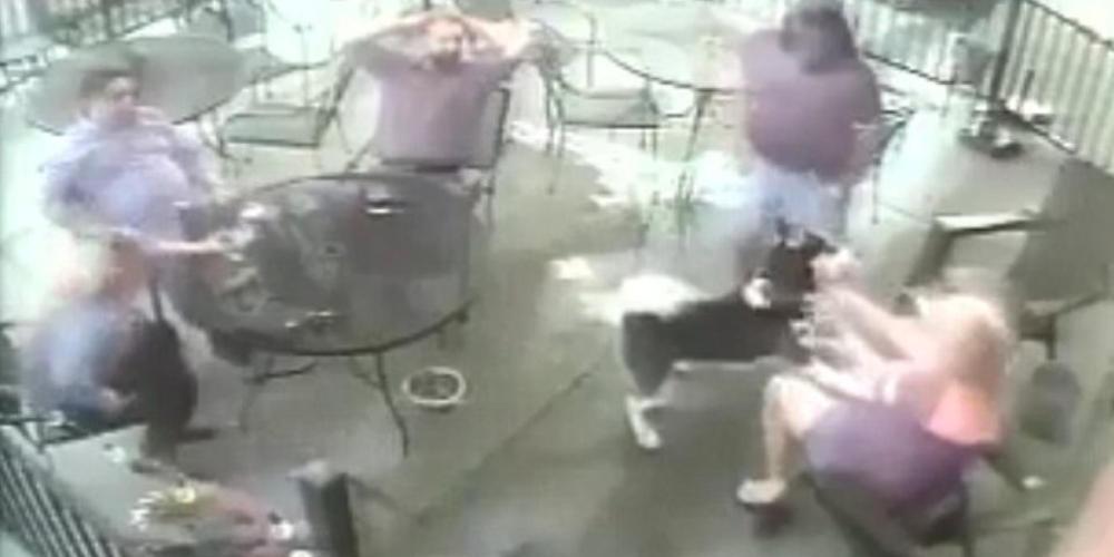 Βίντεο-σοκ: Σκύλος αρπάζει από το πρόσωπο γυναίκα μέσα σε εστιατόριο