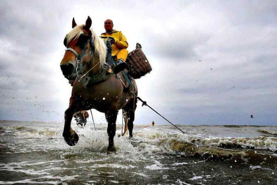 Ο περίεργος παραδοσιακός τρόπος ψαρέματος με… άλογα