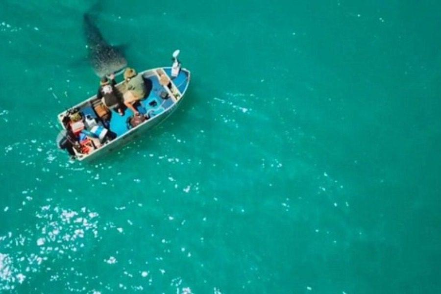 O φαλαινοκαρχαρίας άρχισε να γυρνά γύρω από την βάρκα τους ώσπου έγινε κάτι φοβερό!