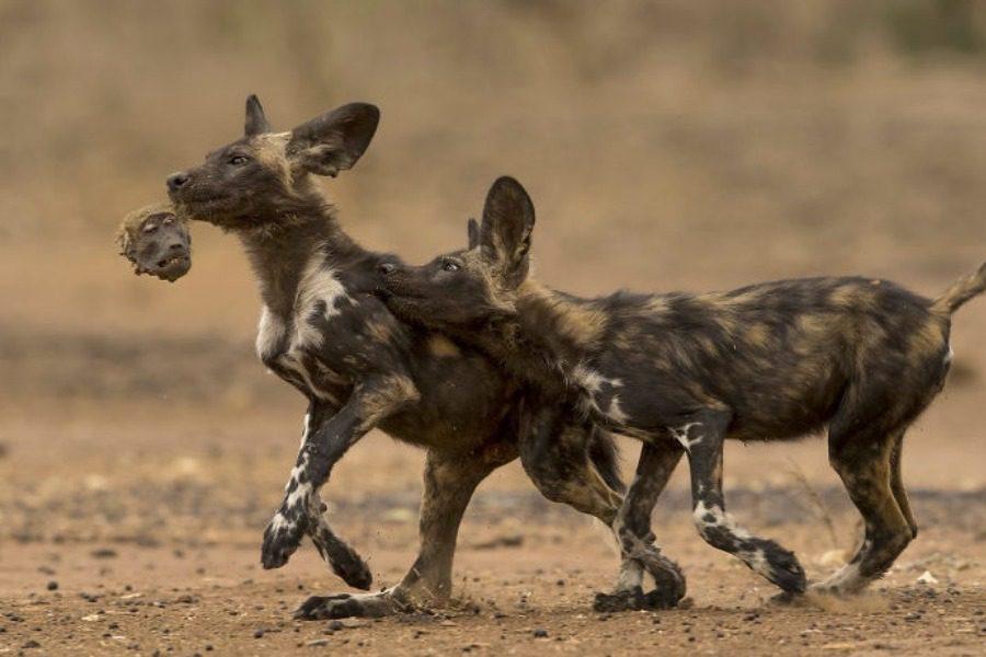 Οι καλύτερες φωτογραφίες της άγριας ζωής για το 2018