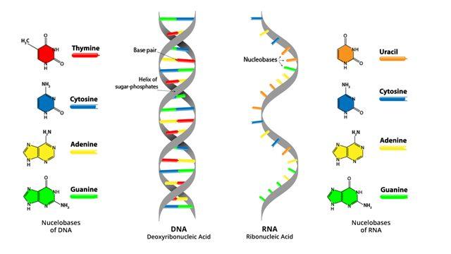 Ανακαλύφθηκε πρωτεΐνη που ανοίγει το δρόμο για… το ελιξήριο της νεότητας!