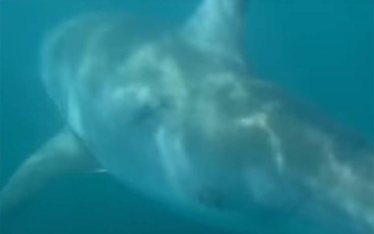 Το ψάρι τσίμπησε και ήταν… λευκός καρχαρίας (βίντεο)