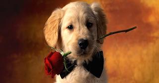 Απ' όλα τα πλάσματα ανιδιοτελώς ξέρουν να αγαπούν μόνο δύο, η μαμά σου κι ο σκύλος σου