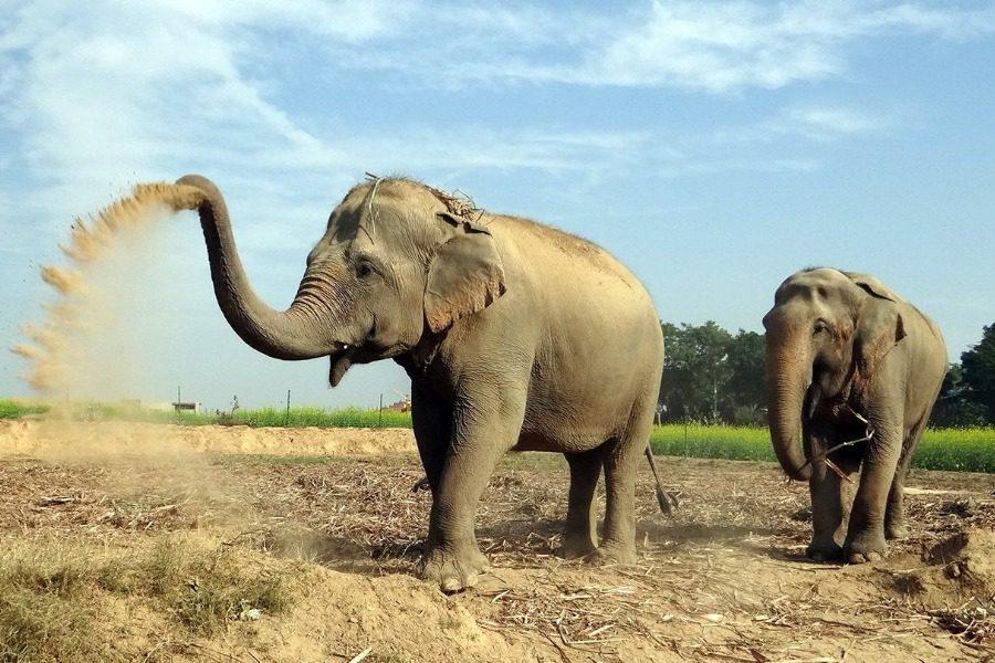 Ελέφαντες νεκροί από ηλεκτροπληξία σε χωριό της Ινδίας