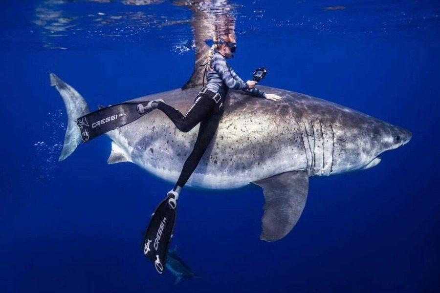 Πανέμορφα πλάνα: Δύτες κολύμπησαν πλάι σε λευκό καρχαρία 6 μέτρων