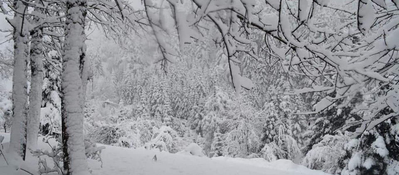 Καιρός Αθήνα: Ποιοι δρόμοι είναι κλειστοί στην Αττική λόγω χιονιά – Πού παρατηρούνται προβλήματα