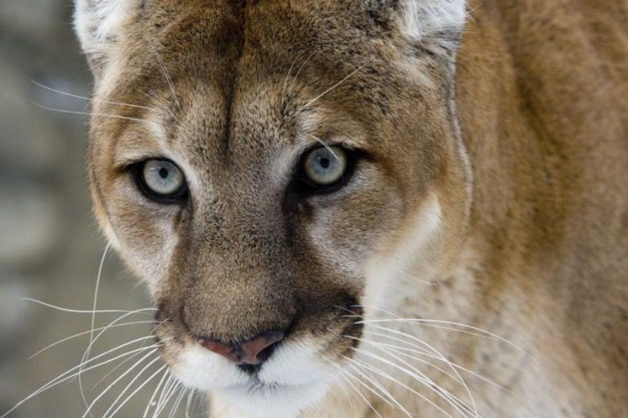 Ποια άγρια ζώα εξαφανίστηκαν από τον πλανήτη μας το 2018;