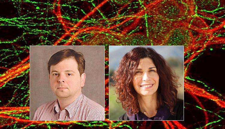 Ερευνητές του ΙΤΕ εντόπισαν τα κύτταρα της μνήμης