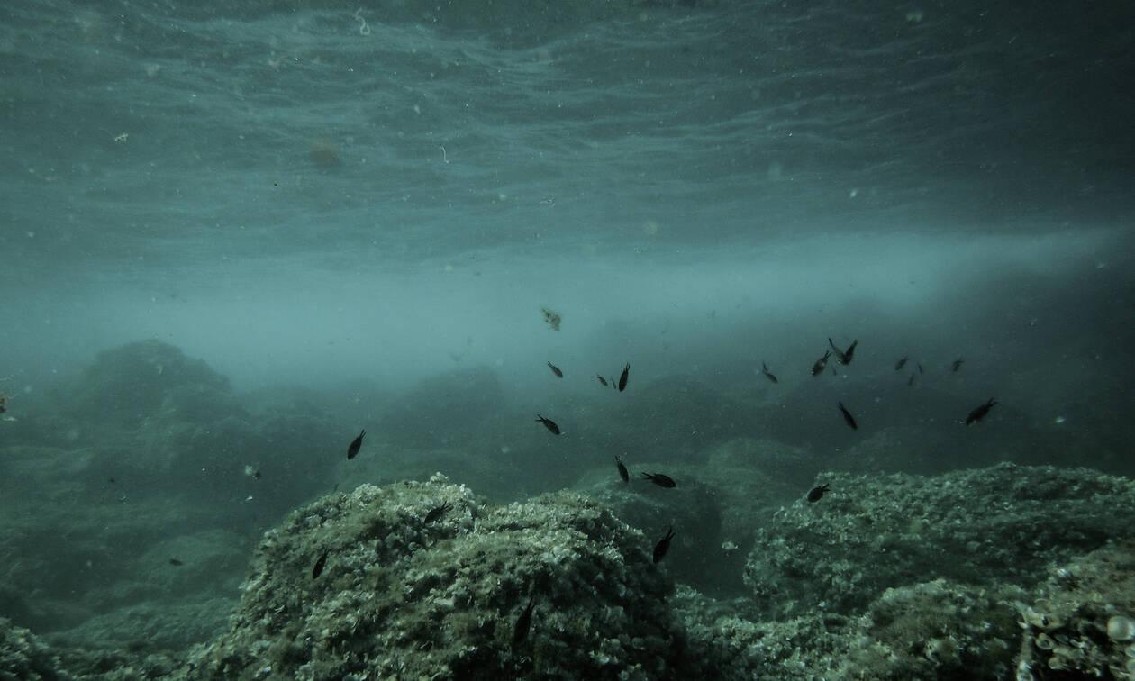 Παράσιτο – «φονιάς» έφτασε στο Αιγαίο και «σπέρνει» θάνατο και καταστροφή στο βυθό της θάλασσας
