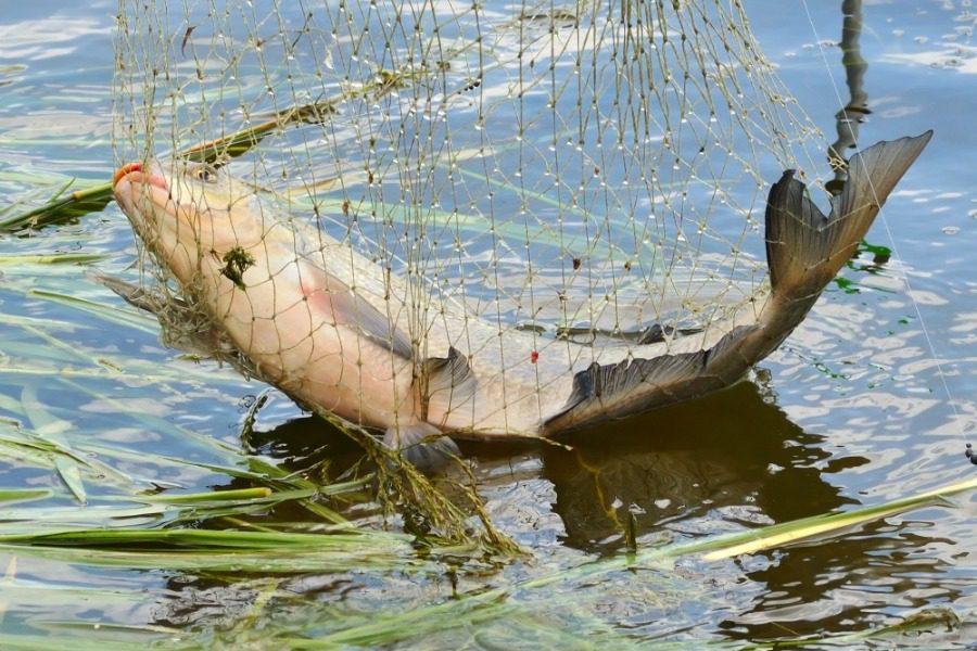 Ποιους μήνες πρέπει να τρως το κάθε ψάρι και γιατί
