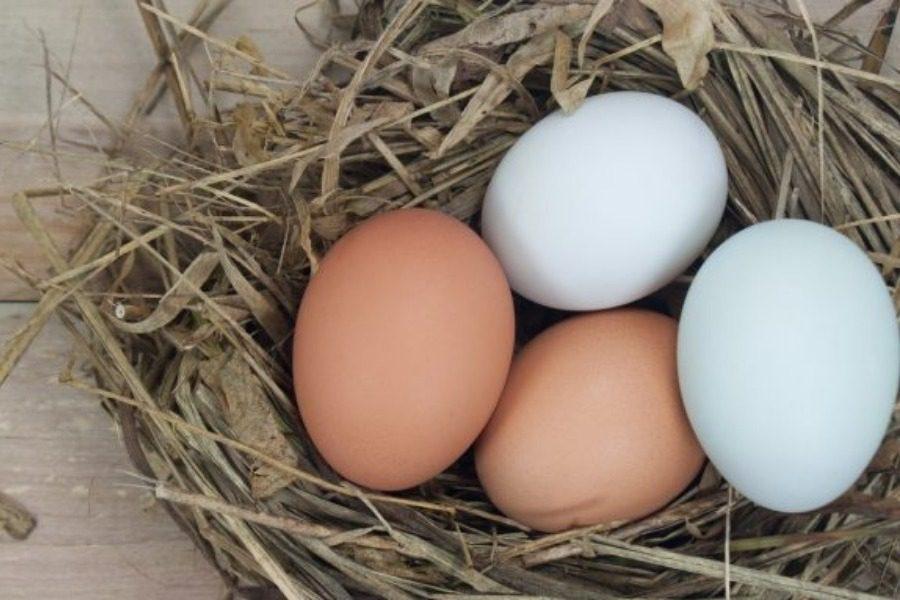 Ξέρετε ποια είναι η διαφορά μεταξύ καφέ και λευκών αβγών;