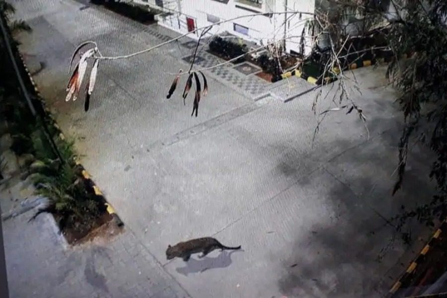 Λεοπάρδαλη έκοβε βόλτες σε εμπορικό κέντρο και ξενοδοχείο