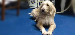 Έριξαν φόλα και δολοφόνησαν τον σκύλο σύμβολο των φιλάθλων του Αστέρα Τρίπολης, τον Ρεξ