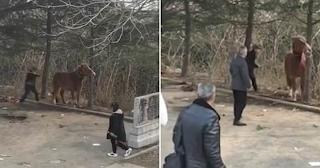 Ηλικιωμένος «μαστιγώνει» με ραβδί άλογο επειδή δεν καθόταν ήσυχο να το βγάλουν φωτογραφίες οι τουρίστες