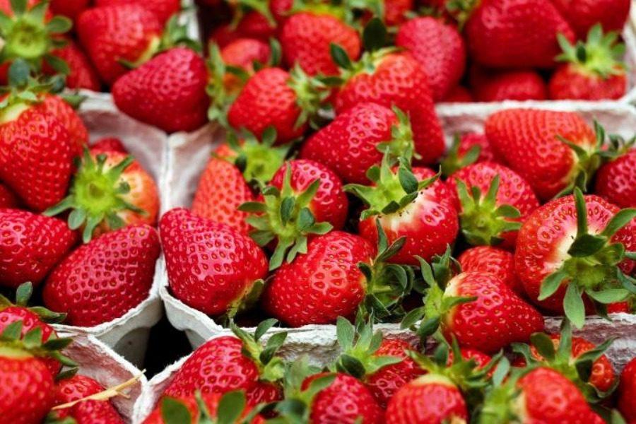 Ο αηδιαστικός λόγος που πρέπει να πλύνεις οπωσδήποτε τις φράουλες πριν τις φας