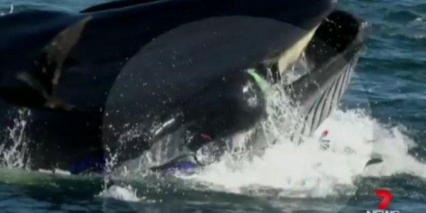 Τον μάσησε η φάλαινα και τον έφτυσε πριν τον καταπιεί! (vid)