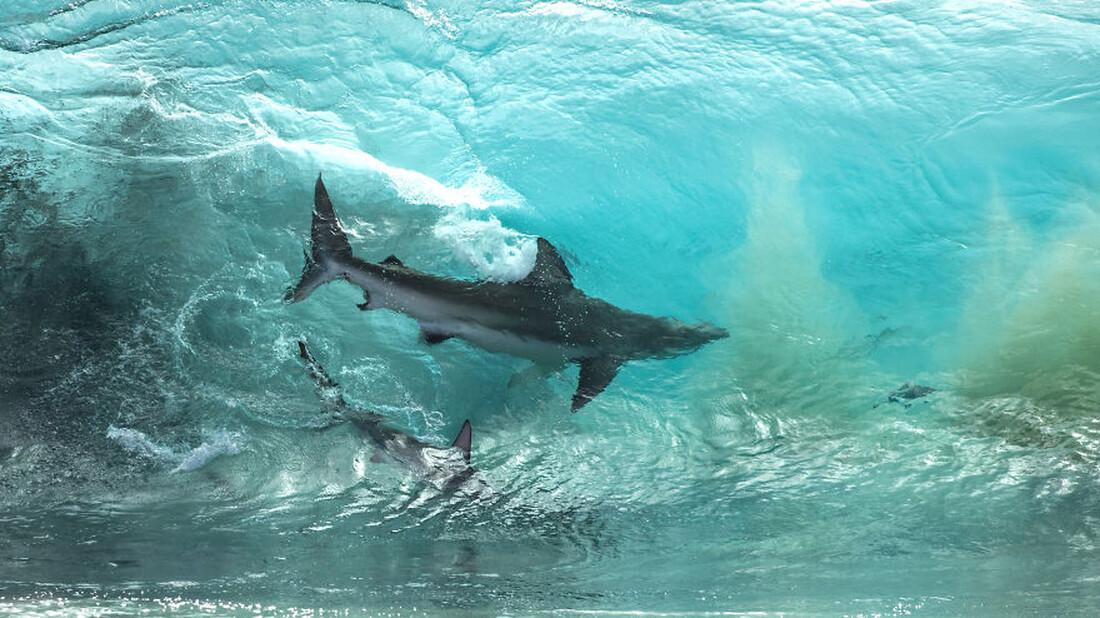 Θα πλησίαζες καρχαρία για μια φωτογραφία;