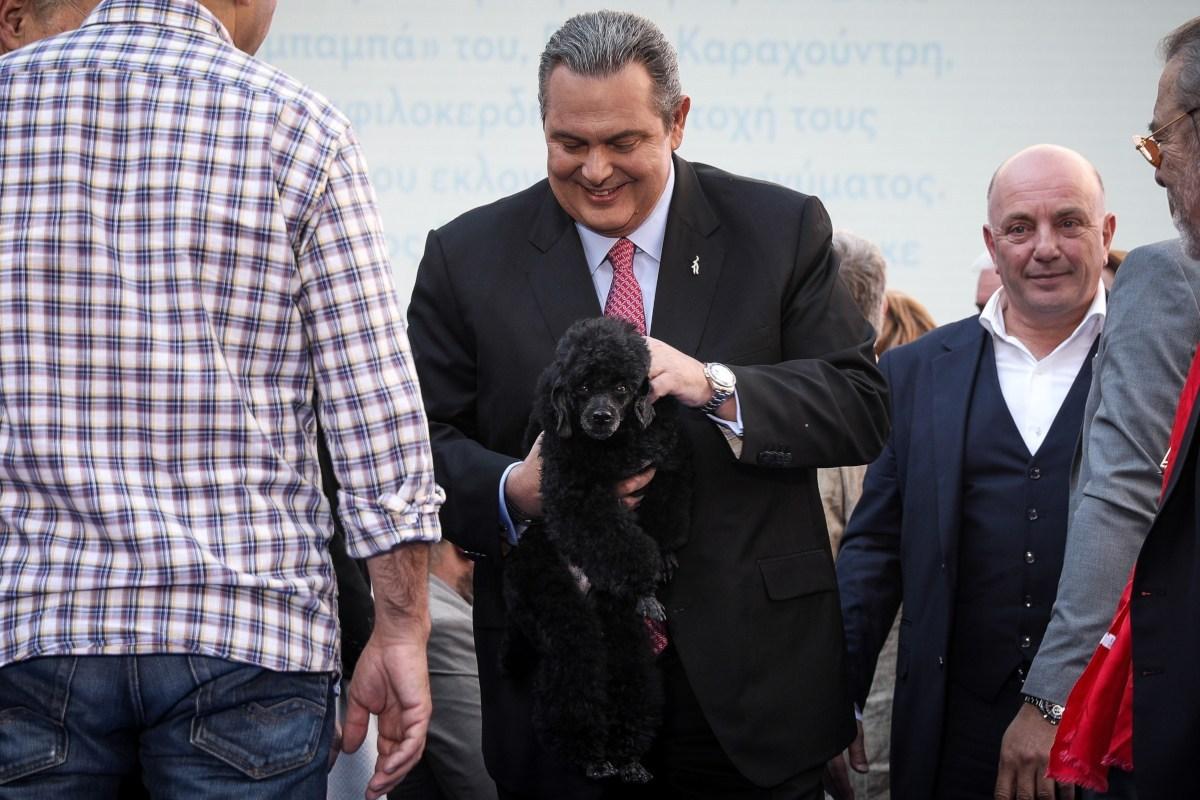 Στο νέο σποτ των ΑΝΕΛ πρωταγωνιστεί ο Θανάσης και είναι… σκύλος (video)