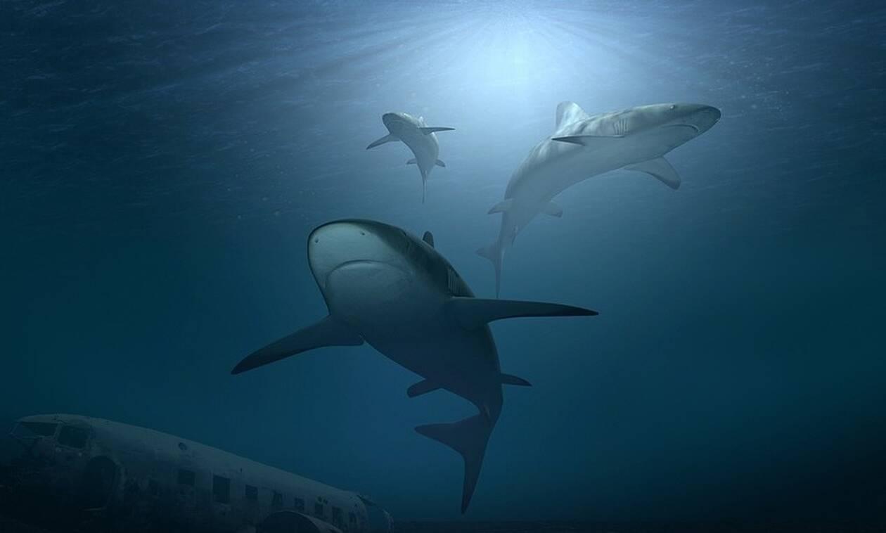 Φωτογραφία – ΣΟΚ με καρχαρίες: Αυτό που είδαν μέσα στο νερό δεν θα το ξεχάσουν ποτέ (pics)