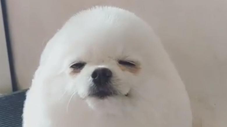 Viral ο αξιολάτρευτος σκύλος που μεταμορφώθηκε σε… αυγό