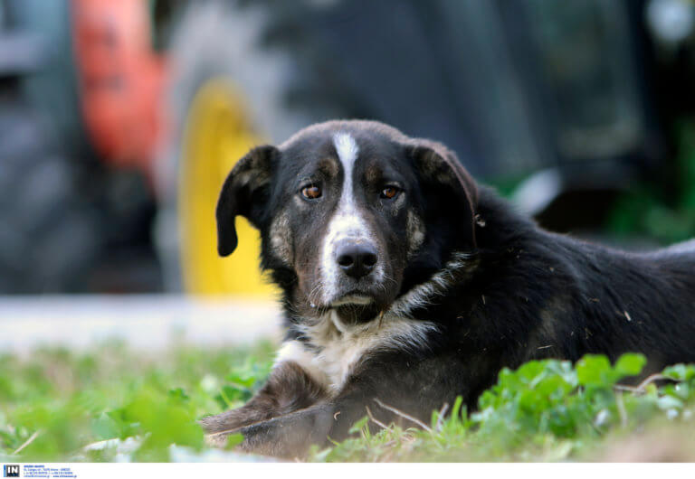 Κρήτη: Κτηνωδία με εκτέλεση αδέσποτου σκύλου – «Ήθελε ένα θάνατο αργό και βασανιστικό»!