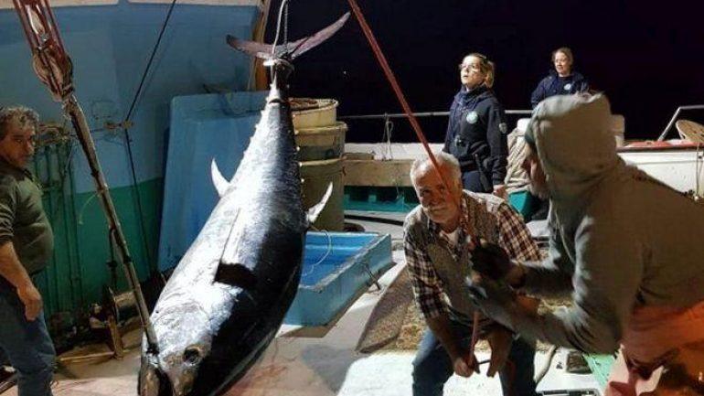 Ψάρεψαν τόνο-γίγαντα 288 κιλών και 2,74 μέτρων