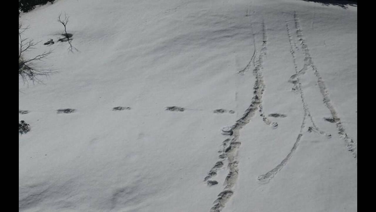 Στρατός εντόπισε το μυθικό Γέτι και δημοσίευσε φωτογραφίες – ντοκουμέντα