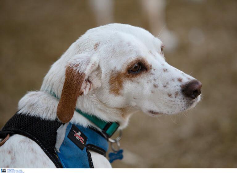 Κέρκυρα: «Καμπάνα» σε 67χρονο που πυροβόλησε το σκύλο του