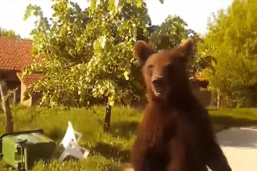Οδηγός συνάντησε δίμετρη αρκούδα που έκανε βόλτες μέσα σε χωριό της Φλώρινας