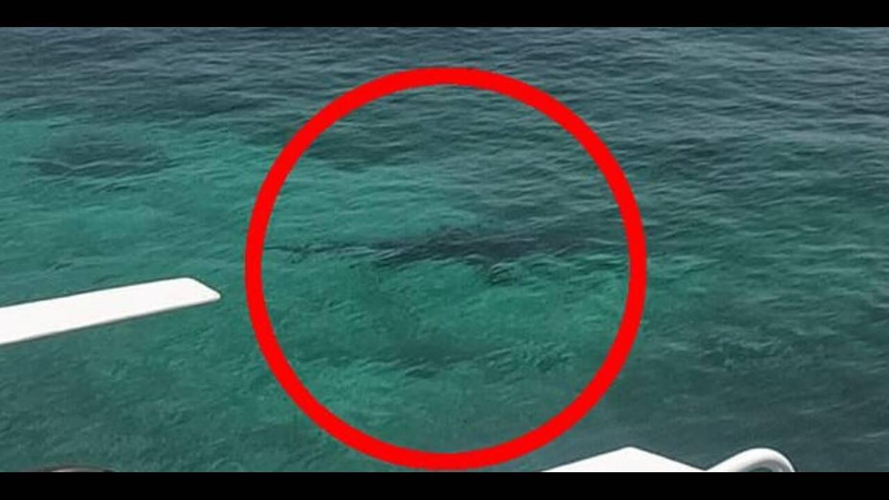 Τρεις καρχαρίες κατασπάραξαν 21χρονη μπροστά στα μάτια των γονιών της