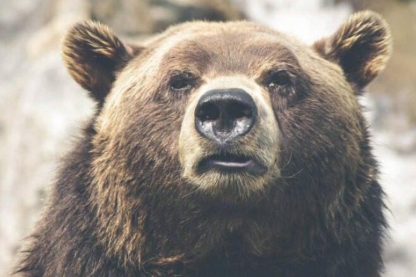 Αρκούδα τον κρατούσε ζωντανό σε σπηλιά έναν μήνα για να τον φάει;