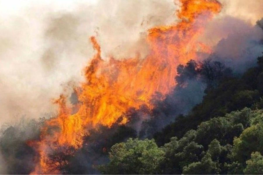 Συνελήφθη 23χρονος για τη χθεσινή φωτιά σε δάσος στη Δυτική Αχαΐα